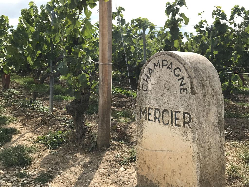 Дегустация шампанского в Эпирне