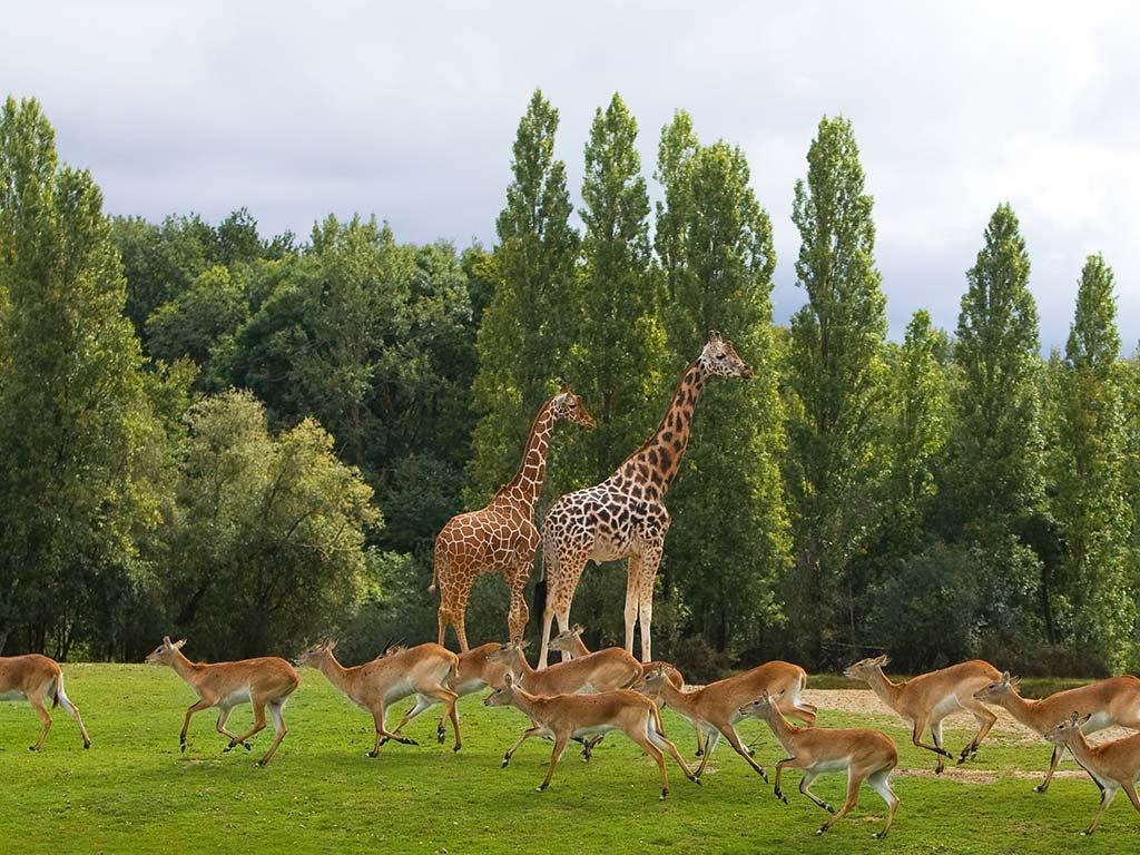 Поездка в зоопарк Таури из Парижа