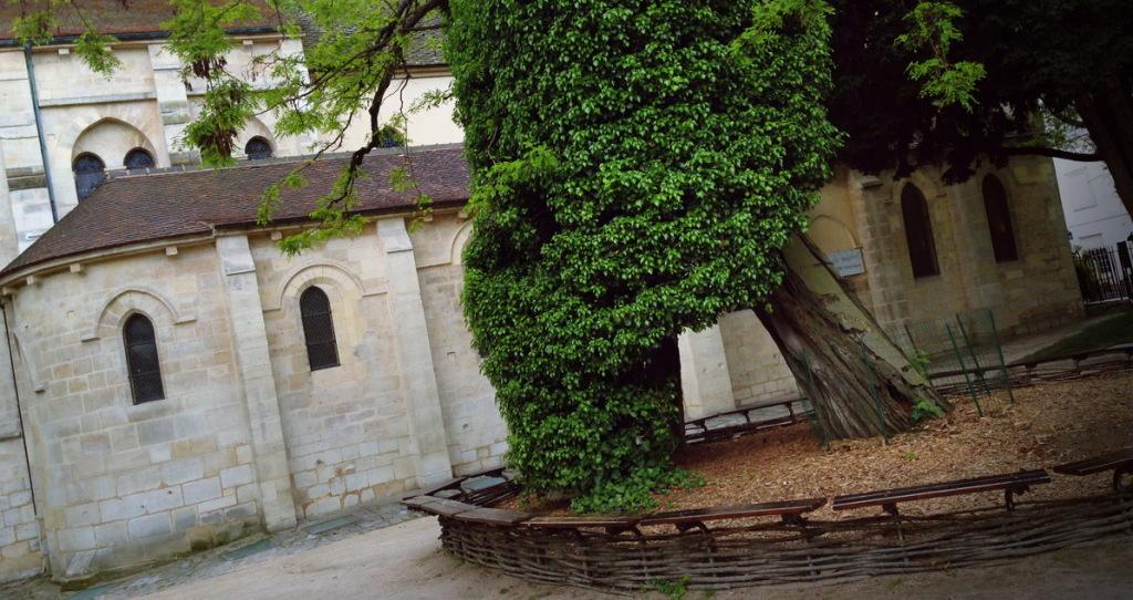 Самое старое дерево Парижа